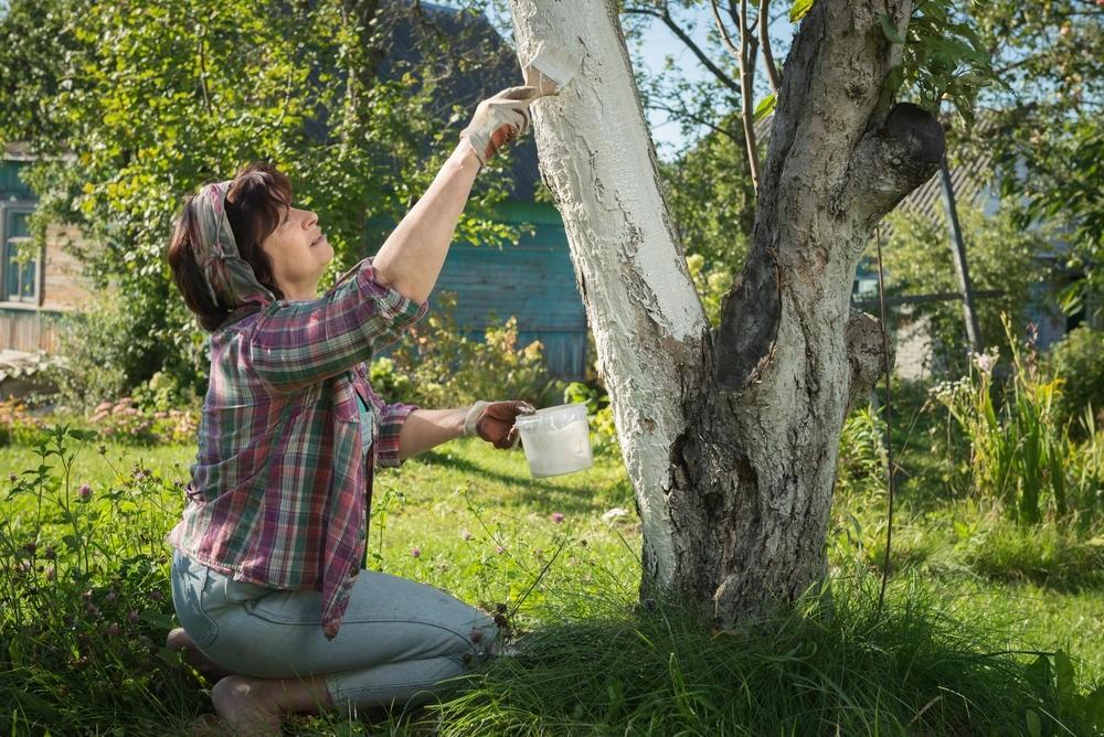 чем побелить деревья чтобы не смывалось