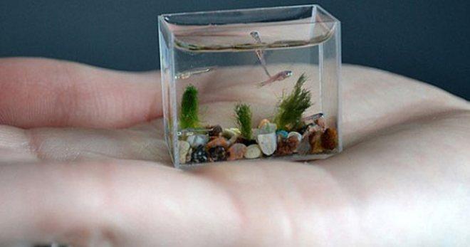 Силикон для аквариума - рекомендации по использованию и выбору
